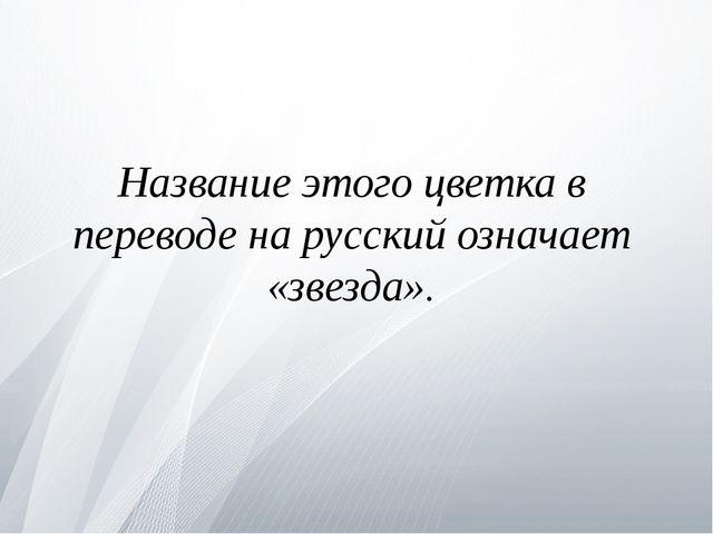 Название этого цветка в переводе на русский означает «звезда».