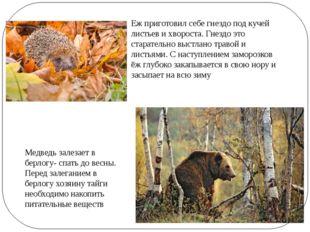 Медведь залезает в берлогу- спать до весны. Перед залеганием в берлогу хозяин