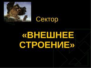 Сектор «ВНЕШНЕЕ СТРОЕНИЕ»