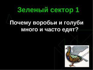 Зеленый сектор 1 Почему воробьи и голуби много и часто едят?