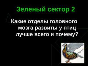 Зеленый сектор 2 Какие отделы головного мозга развиты у птиц лучше всего и по
