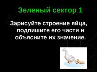 Зеленый сектор 1 Зарисуйте строение яйца, подпишите его части и объясните их