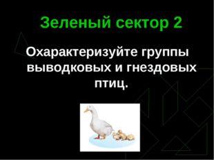 Зеленый сектор 2 Охарактеризуйте группы выводковых и гнездовых птиц.