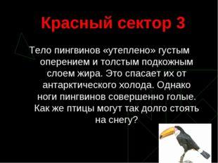 Красный сектор 3 Тело пингвинов «утеплено» густым оперением и толстым подкожн
