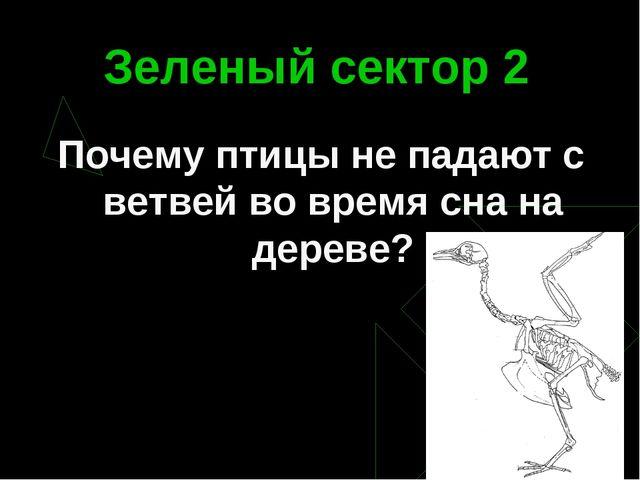 Зеленый сектор 2 Почему птицы не падают с ветвей во время сна на дереве?
