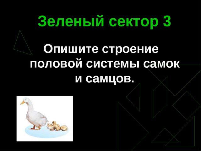 Зеленый сектор 3 Опишите строение половой системы самок и самцов.