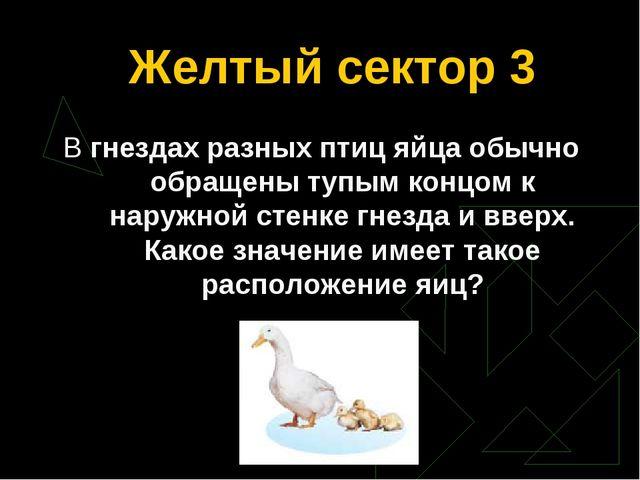 Желтый сектор 3 В гнездах разных птиц яйца обычно обращены тупым концом к нар...