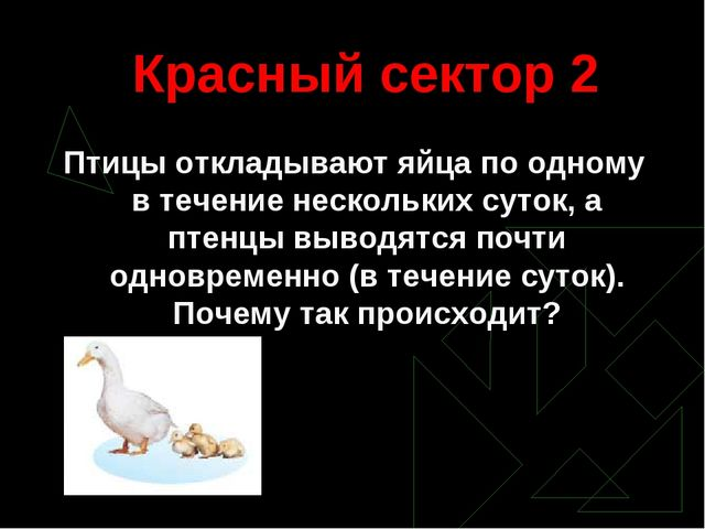 Красный сектор 2 Птицы откладывают яйца по одному в течение нескольких суток,...