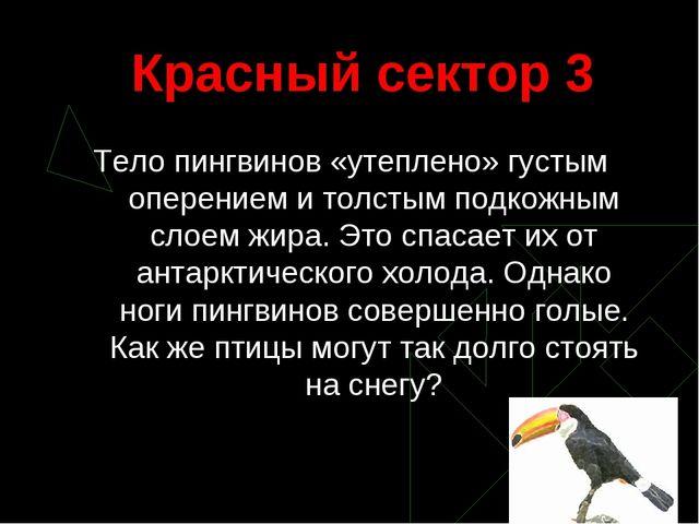 Красный сектор 3 Тело пингвинов «утеплено» густым оперением и толстым подкожн...