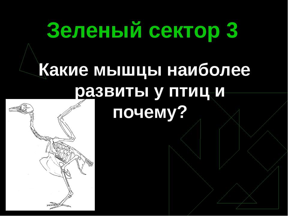 Зеленый сектор 3 Какие мышцы наиболее развиты у птиц и почему?