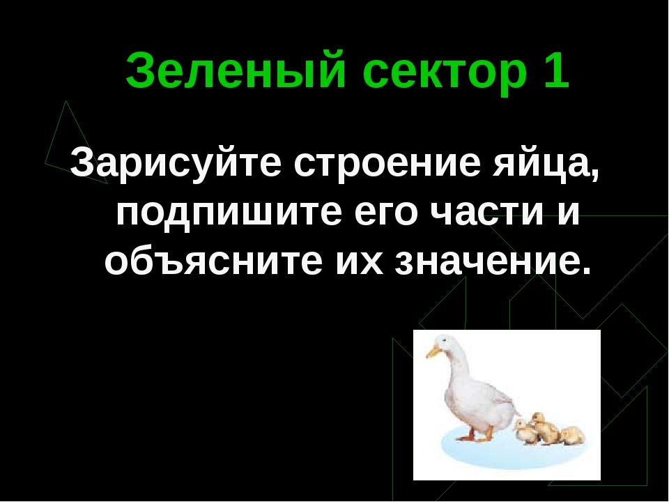 Зеленый сектор 1 Зарисуйте строение яйца, подпишите его части и объясните их...
