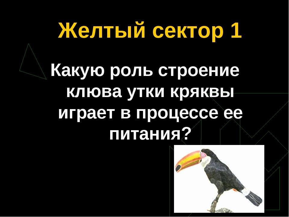 Желтый сектор 1 Какую роль строение клюва утки кряквы играет в процессе ее пи...