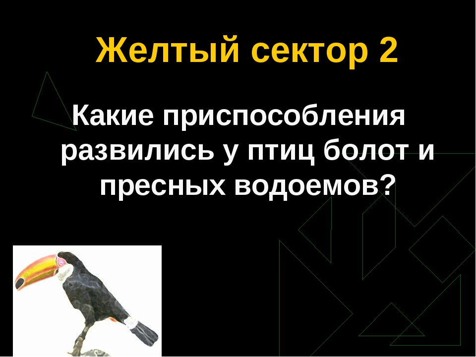 Желтый сектор 2 Какие приспособления развились у птиц болот и пресных водоемов?