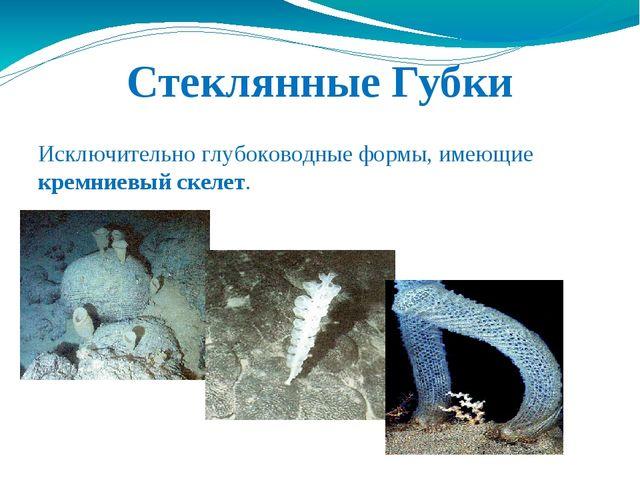 Стеклянные Губки Исключительно глубоководные формы, имеющие кремниевый скелет.
