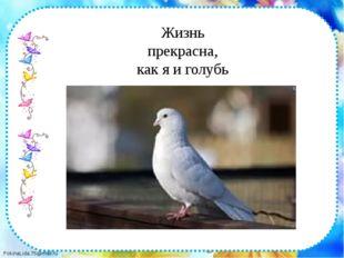 Жизнь прекрасна, как я и голубь FokinaLida.75@mail.ru