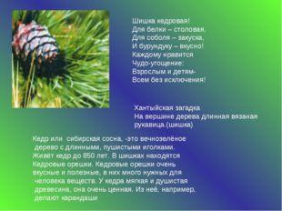 Кедр или сибирская сосна, -это вечнозелёное дерево с длинными, пушистыми игол