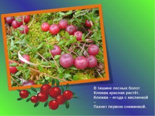 В тишине лесных болот Клюква красная растёт. Клюква – ягода с кислинкой – Пах
