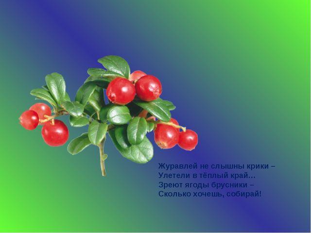 Журавлей не слышны крики – Улетели в тёплый край… Зреют ягоды брусники – Скол...