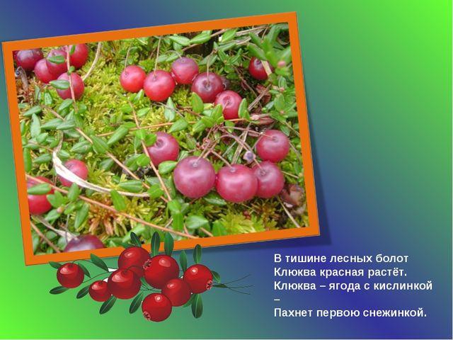 В тишине лесных болот Клюква красная растёт. Клюква – ягода с кислинкой – Пах...