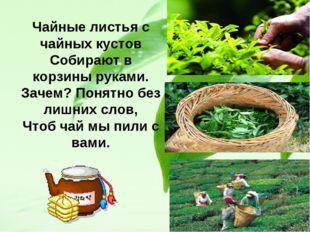 Чайные листья с чайных кустов Собирают в корзины руками. Зачем? Понятно без л