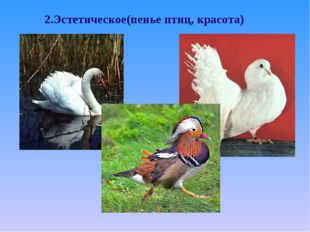 2.Эстетическое(пенье птиц, красота)