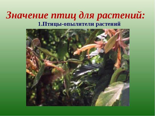Значение птиц для растений: 1.Птицы-опылители растений