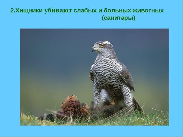 2.Хищники убивают слабых и больных животных (санитары)