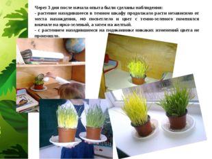 Через 3 дня после начала опыта были сделаны наблюдения: - растение находившее