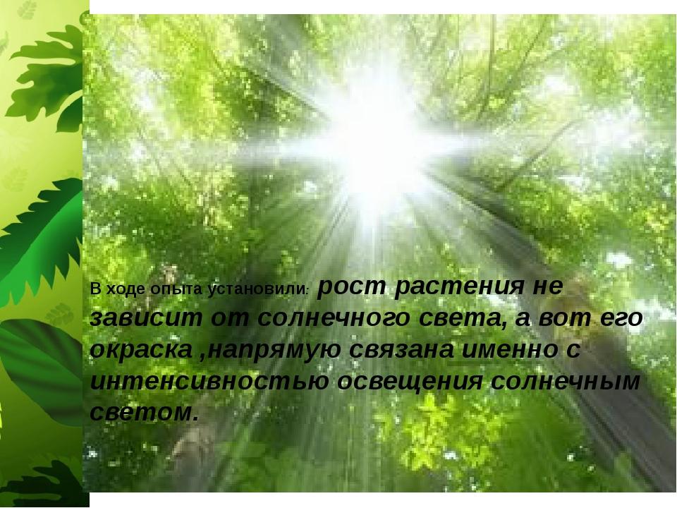 В ходе опыта установили: рост растения не зависит от солнечного света, а вот...