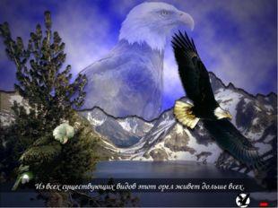 Из всех существующих видов этот орел живет дольше всех.