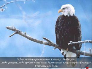 И вот тогда у орла остаются только два выхода: либо умереть, либо пройти чере