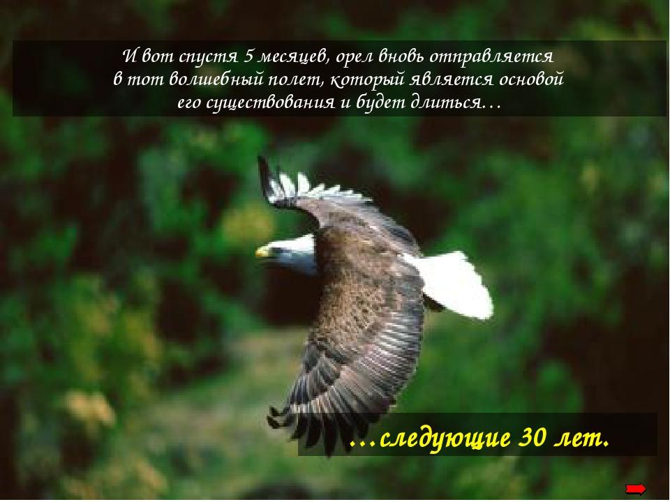 …следующие 30 лет. И вот спустя 5 месяцев, орел вновь отправляется в тот волш...