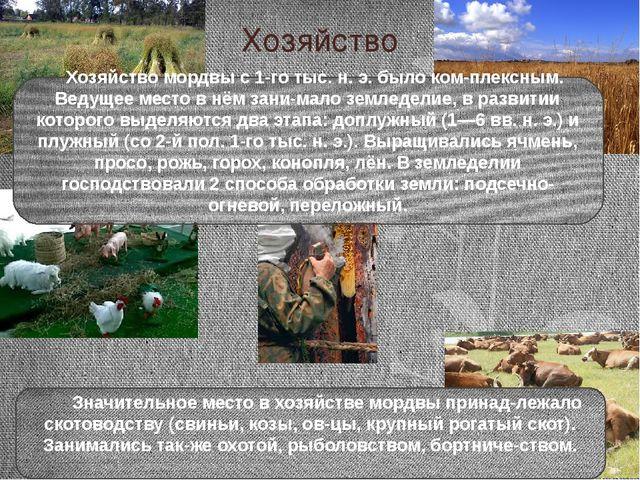 Хозяйство Хозяйство мордвы с 1-го тыс. н. э. было комплексным. Ведущее место...