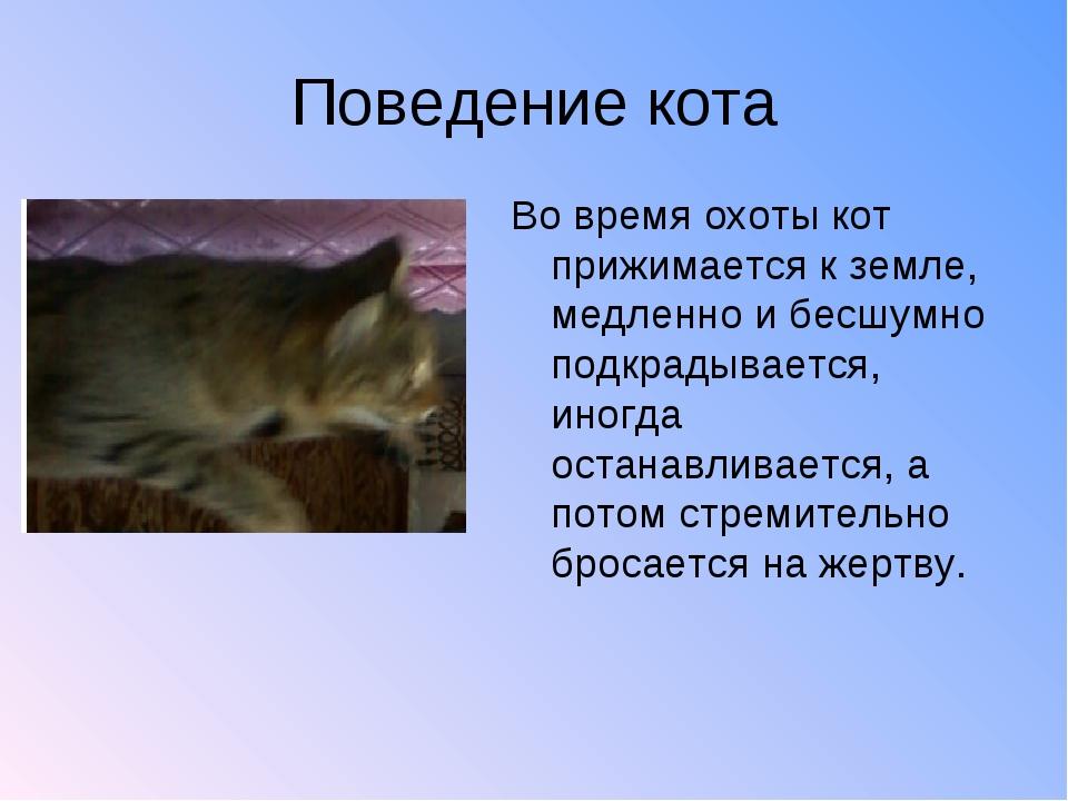 Поведение кота Во время охоты кот прижимается к земле, медленно и бесшумно по...