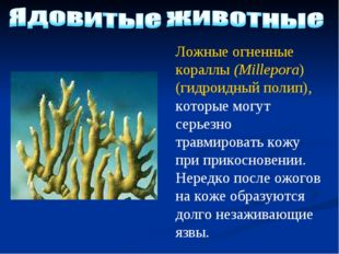 Ложные огненные кораллы (Millepora) (гидроидный полип), которые могут серьезн