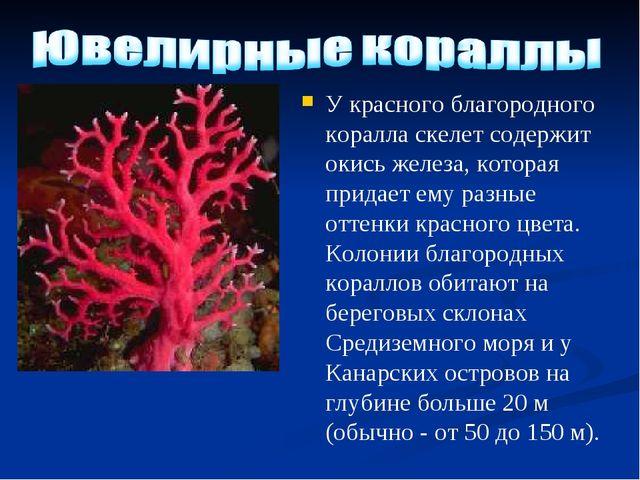 У красного благородного коралла скелет содержит окись железа, которая придает...