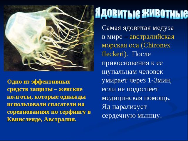 Самая ядовитая медуза в мире – австралийская морская оса (Chironex fleckeri)....
