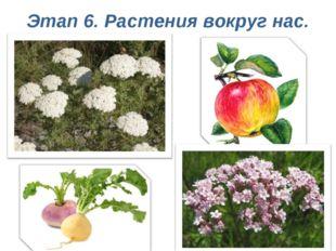 Этап 6. Растения вокруг нас.