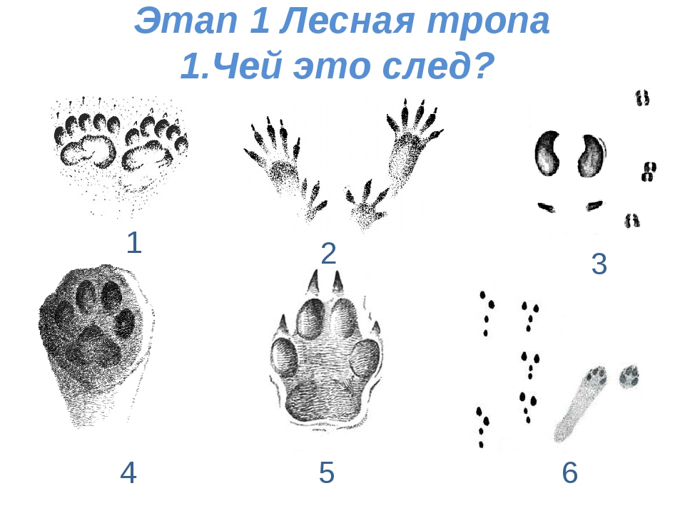 Этап 1 Лесная тропа 1.Чей это след? 1 2 3 4 5 6