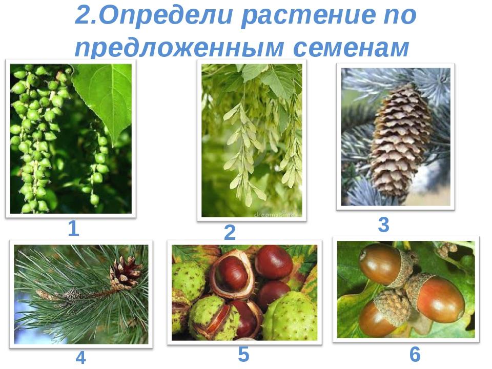 2.Определи растение по предложенным семенам 1 2 3 4 5 6