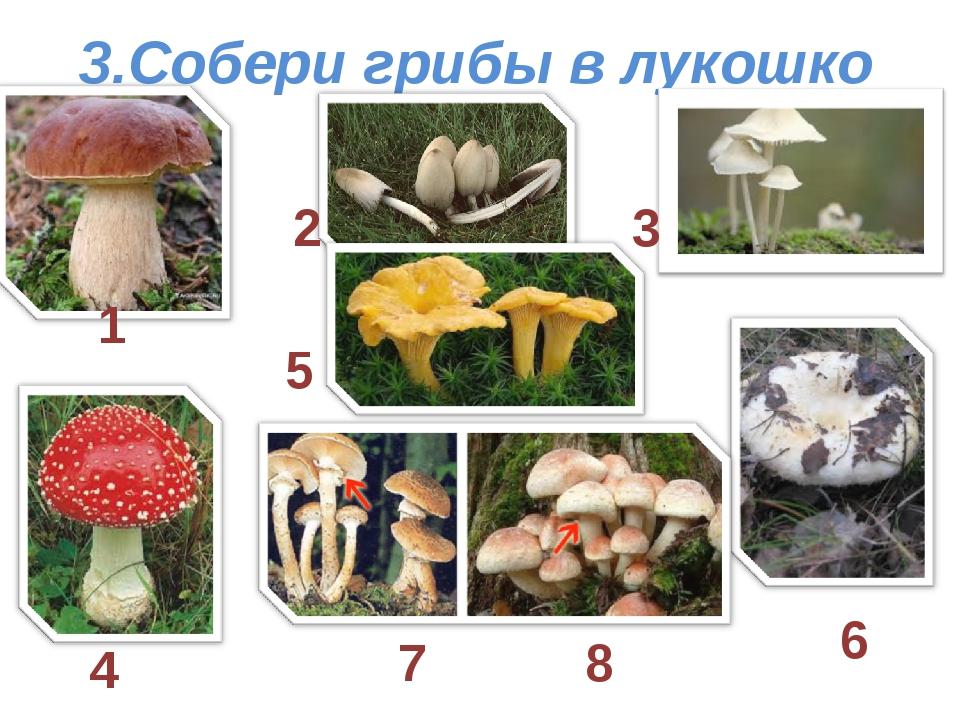 3.Собери грибы в лукошко 1 2 3 4 5 6 7 8