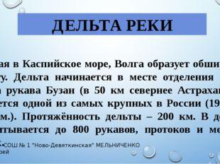 ДЕЛЬТА РЕКИ Впадая в Каспийское море, Волга образует обширную дельту. Дельта