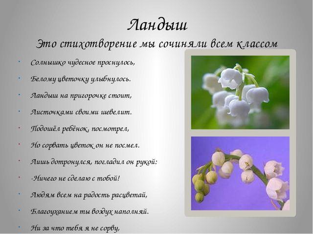 Ландыш Это стихотворение мы сочиняли всем классом Солнышко чудесное проснулос...