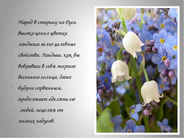 Народ в старину на Руси высоко ценил цветки ландыша за его целебные свойства...