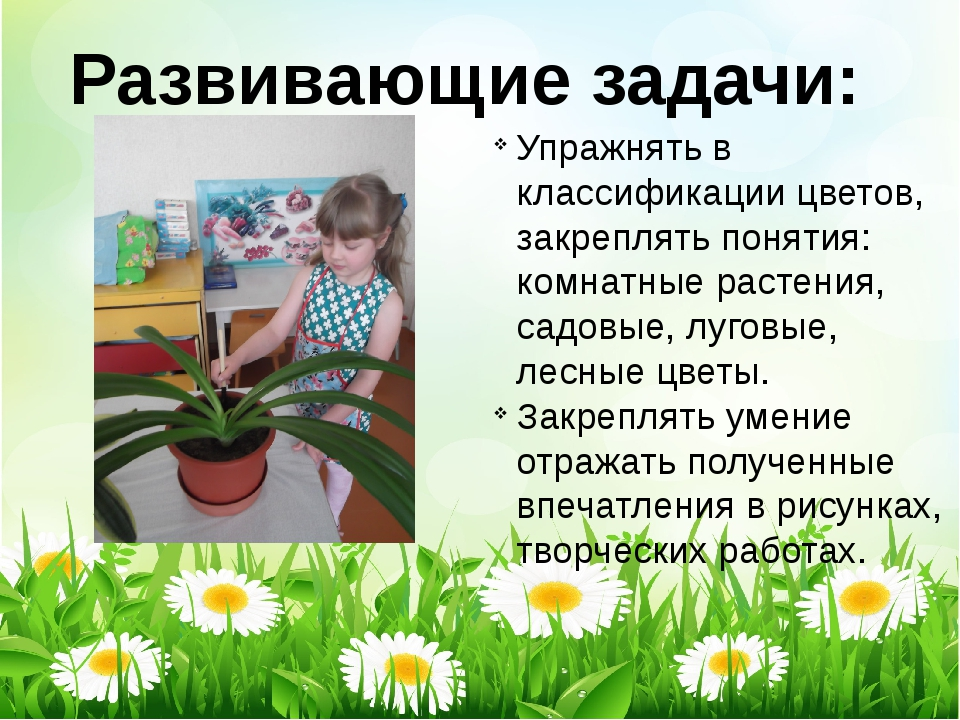Развивающие задачи: Упражнять в классификации цветов, закреплять понятия: ком...