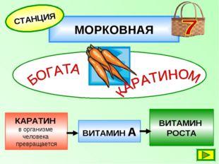 МОРКОВНАЯ СТАНЦИЯ КАРАТИН в организме человека превращается ВИТАМИН РОСТА ВИТ