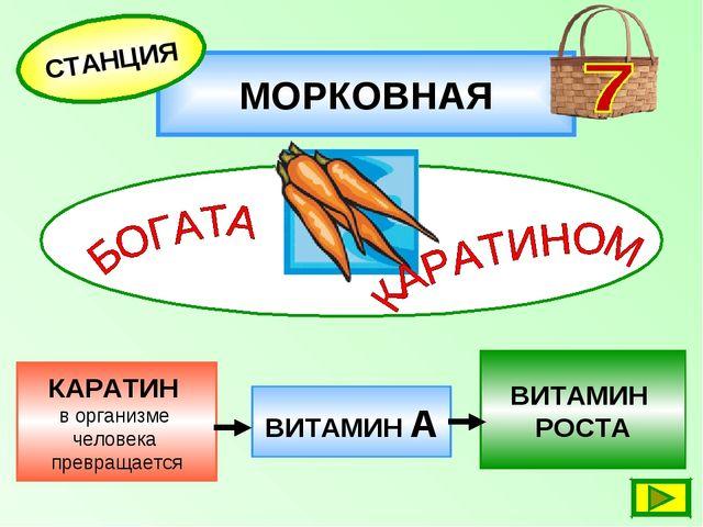 МОРКОВНАЯ СТАНЦИЯ КАРАТИН в организме человека превращается ВИТАМИН РОСТА ВИТ...