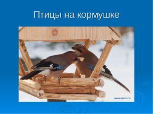 Птицы на кормушке