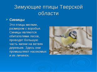 Зимующие птицы Тверской области Синицы Это птицы мелкие, размером с воробья.