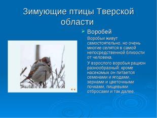Зимующие птицы Тверской области Воробей Воробьи живут самостоятельно, но очен
